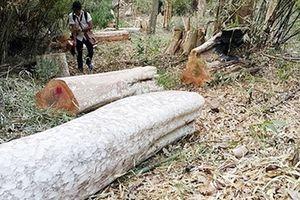 Điều tra vụ 360ha rừng 'biến mất' ở Gia Lai
