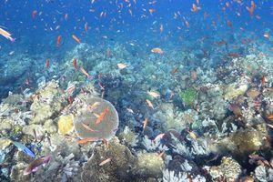 Lặn ngắm hệ sinh thái đẹp mê hồn dưới đáy biển đảo Komodo, Indonesia