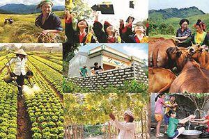 An sinh xã hội và phát triển xanh: 'Chìa khóa' giúp doanh nghiệp phát triển bền vững