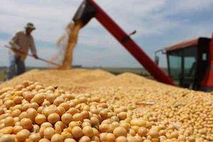 Trung Quốc ngừng mua cả trăm nghìn tấn đậu tương Mỹ