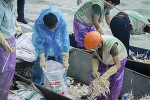 Công nhân 'chạy đua với thời gian' vớt 25 tấn cá chết ở Hồ Tây