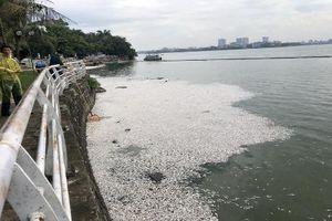 Dân mạng nói gì về hiện tượng cá chết trắng một góc Hồ Tây?