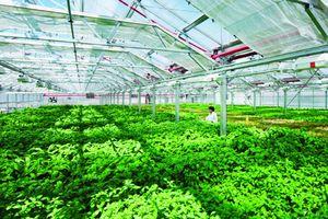 Ngành Nông nghiệp 6 tháng đầu năm 2018: Nỗ lực tăng trưởng mạnh