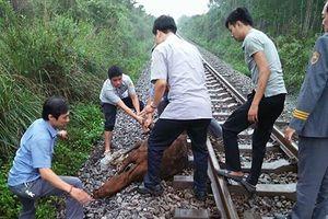 Tàu khách đâm phải trâu, đường sắt Bắc – Nam tê liệt nhiều giờ