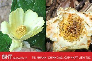 Công bố 2 loài thực vật quý hiếm ở VQG Vũ Quang trên tạp chí quốc tế