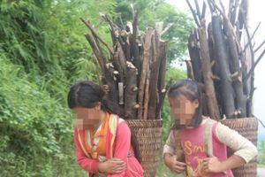 Đắk Nông: Nhiều trẻ em bị dụ dỗ, ép 'lao động khổ sai' ở TPHCM