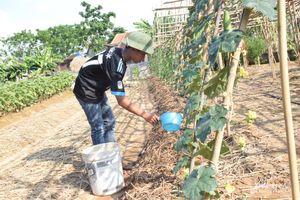 Nghệ An: Khởi động thí điểm vườn mẫu nông thôn mới