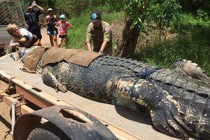 Úc bắt được cá sấu khổng lồ sau 8 năm săn lùng