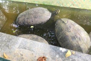 Phát hiện 44 con vật quý hiếm bị nuôi nhốt ở Kiên Giang