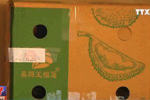 14 tấn sầu riêng nghi ngâm hóa chất tại Đồng Nai