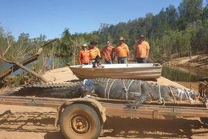 Bắt được cá sấu hơn 4,7m sau 8 năm săn tìm