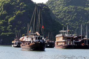 Cát Bà, Hải Phòng: Hơn 100 tàu đang chờ cấp phép hoạt động