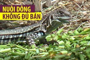 Nuôi dông Ninh Thuận: Giá cao vẫn không đủ hàng bán