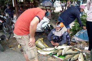 Người dân rớt nước mắt bán tháo cá nuôi chết đột ngột