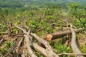 Khởi tố hàng chục đối tượng phá rừng phòng hộ