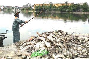 Hải Dương: Cá chết do sốc nhiệt