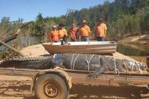 Điều gì khiến 'cá sấu chúa' mới bị bắt ở Úc to lớn khủng khiếp?