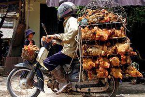 Giả nhân viên kiểm dịch, cưỡng đoạt tiền của người buôn gà