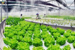 Xây dựng chuỗi sản xuất rau an toàn đảm bảo nguồn thực phẩm sạch Nhu cầu tiêu thụ nông sản an toàn nói chung và rau an toàn nói riêng hiện nay đang trở thành vấn đề cấp bách đối với toàn xã hội, đặc biệt tại các thành phố lớn như Hà Nội và Thành phố Hồ Ch