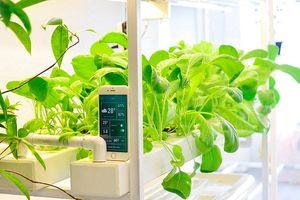 Làm nông nghiệp, không phải cứ ứng dụng công nghệ cao là thành công