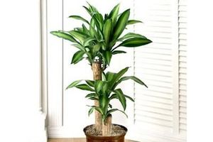 10 loại cây cảnh giúp hút khí độc trong nhà