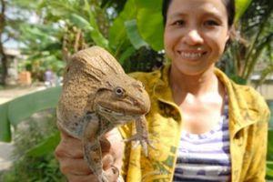 Nuôi ếch, làm chà bông ếch xuất khẩu thành tỷ phú ở Đồng Tháp Mười