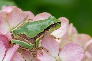Ảnh hoàng tử ếch bên hoa đẹp ngây ngất lòng người