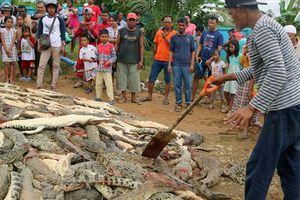 Kinh hoàng dân làng ở Indonesia giết chết gần 300 con cá sấu