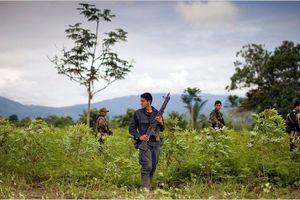 Peru bắt giữ 50 người buôn ma túy tại biên giới Colombia