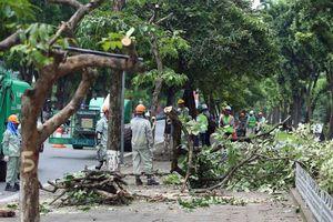 Hà Nội: Chủ động đề phòng nguy cơ cây xanh gãy đổ do bão số 3