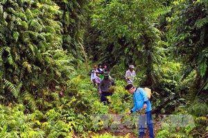 Đắk Lắk thu hồi đất lâm nghiệp lấn chiếm trái phép để trồng lại rừng