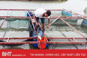 Tất bật sơ tán, bảo vệ cá lồng bè trước bão Sơn Tinh