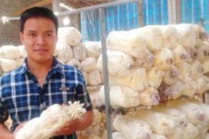 Cử nhân bỏ phố về quê, vay 1 tỷ trồng nấm, đút túi chục triệu/tháng