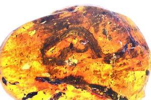Phát hiện hóa thạch rắn 99 triệu năm trong đá hổ phách