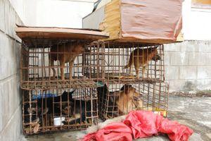 Bắt giữ 2 nghi phạm trộm 9 con chó trong 1 đêm