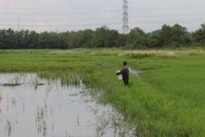 BĐS TP.HCM ra sao khi chuyển đổi 26.000 ha đất nông nghiệp?