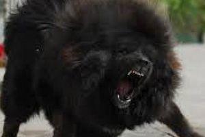 Kinh hoàng trẻ em bị chó nhà nuôi tấn công dã man