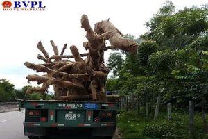 Thêm một cây 'khủng' từ Phú Yên đi ra Bắc bị CSGT bắt giữ tại Quảng Trị