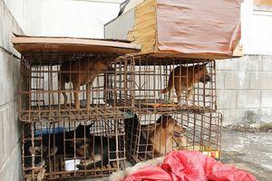 'Cẩu tặc' dùng xe máy gắn biển số giả đi trộm 9 con chó