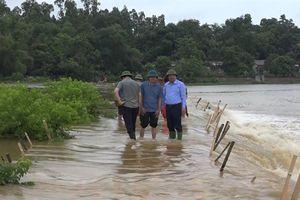 Cẩm khê mênh mông 'biển' nước, nông nghiệp bị ảnh hưởng nặng nề