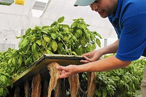 Thăm thị trấn đầu tiên trên thế giới làm nông nghiệp organic 100%