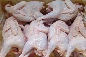 Sự thật kinh hoàng về gà dai thải loại siêu rẻ tràn lan thị trường TP.HCM