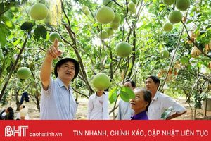 'Cú hích' lớn cho sản xuất cây ăn quả có múi ở Hà Tĩnh