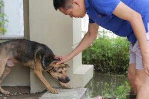 Lội nước ngập hớt hải tìm chó cưng trong khu đô thị ở Hà Nội