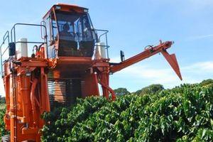 Sản lượng nông sản xuất khẩu chủ chốt của Brazil có thể giảm do hạn hán