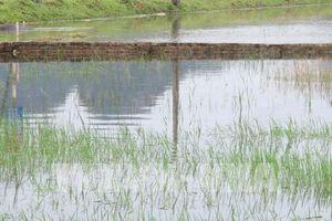 Khắc phục hậu quả mưa bão đối với sản xuất vụ Hè Thu, Mùa