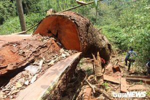 Để mất rừng lim xanh và khoáng sản, nhiều cán bộ bị kỷ luật