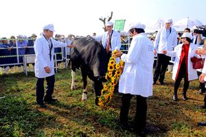 5 điều chỉ có ở trang trại bò sữa hữu cơ TH true MILK