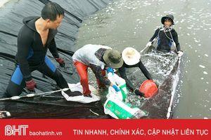 Lộc Hà sẵn sàng phương án 'chạy' mưa lũ cho thủy sản nuôi