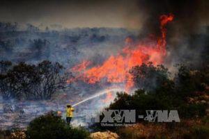 Cháy rừng tại Hy Lạp khiến hơn 120 người người thương vong